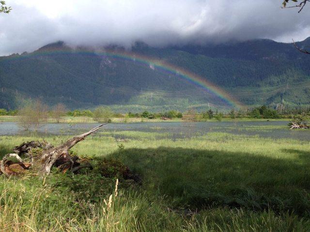 an estuary rainbow